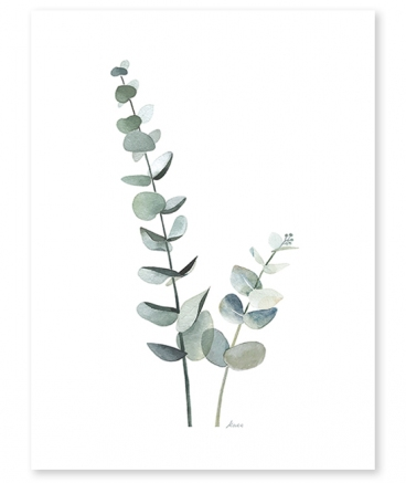 poster eucalyptus nature lilipinso