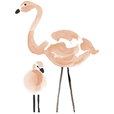stickers famille flamand rose